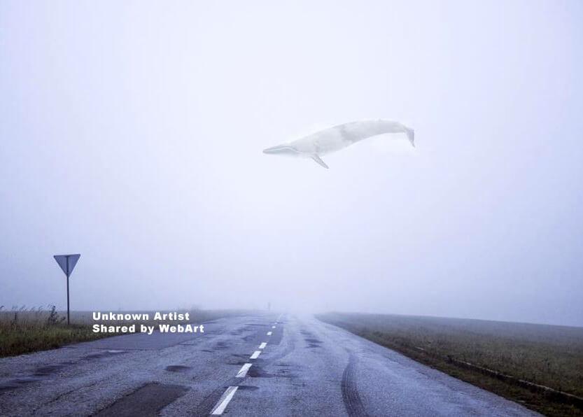 Balena sulla Strada
