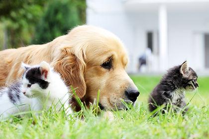 hund og to katte i græs