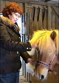 HesteAllergi.jpg