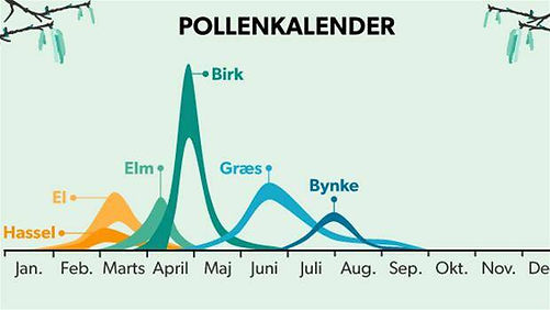 Pollenkalender birk, græs, bynke, elm, el, hassel