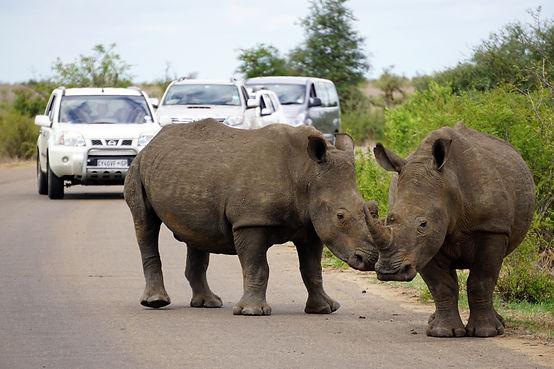 Rhino in KNP