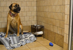 Flea Tick and Mange Treatments as well as complete prescription needs