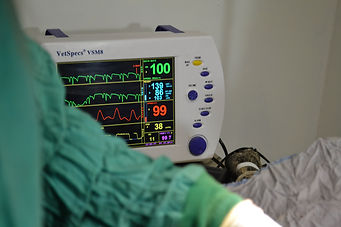 Advanced Surgical Anesthetic Monitoring For dogs and cats