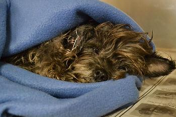 Butler Veterinary Clinic - Emergency Surgery