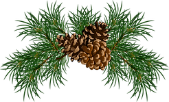 pine_cone_.png