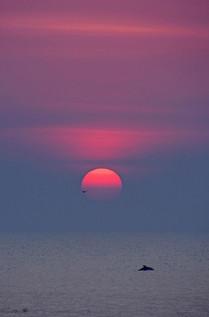 Dolphin sunrise.