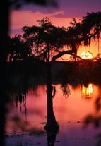 Cypress sunset.