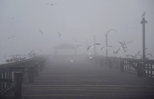 Foggy seagulls.