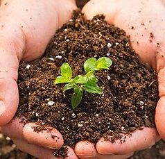soil-3oo-295x284.jpg
