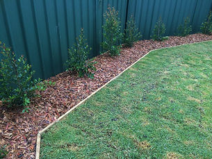 lilly pilly, Timber edging, Garden, Mulch
