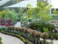 PLANT-SELECTION-AT-WHOLESALERS.jpg