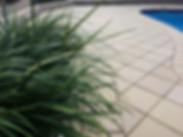 liriope, paving, pool pavers, pool tiling