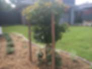 Tree, Lawn, Grass, Plants