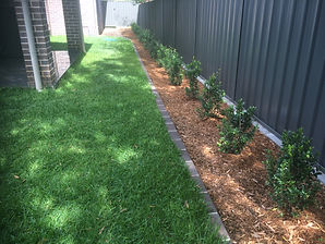 Grass, Turf, Buffallo lawn