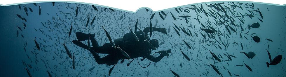 divers paradise 10.jpeg
