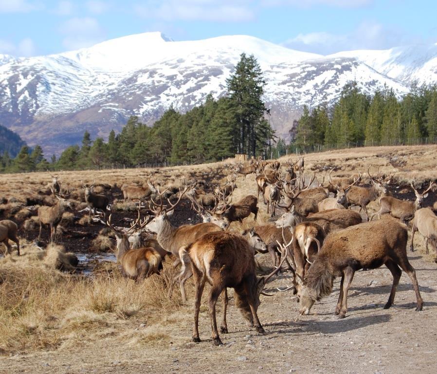 Deer feed.jpg