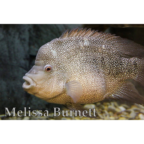 Fish Photo Print