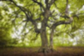 Psykoterapi | Ditt Sanne Jeg