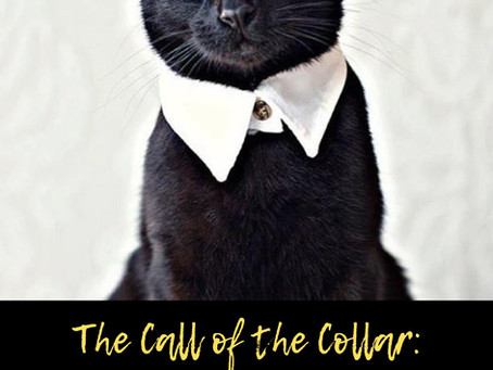 The Call of the Collar: Attaching Style To A Sleepy Winter
