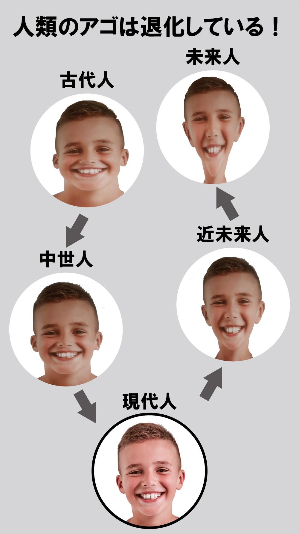 顎の退化 咀嚼と顔の進化