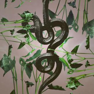 """""""Snake and Flora"""" Video Loop"""