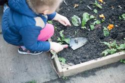 Mucky garden