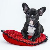 dog learning mat training
