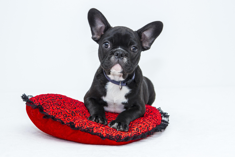 ✴︎仮予約✴︎ 小型犬(8kg以下)1日1回