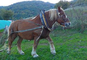 cheval de trait, comptois, traction animale, debardage au cheval