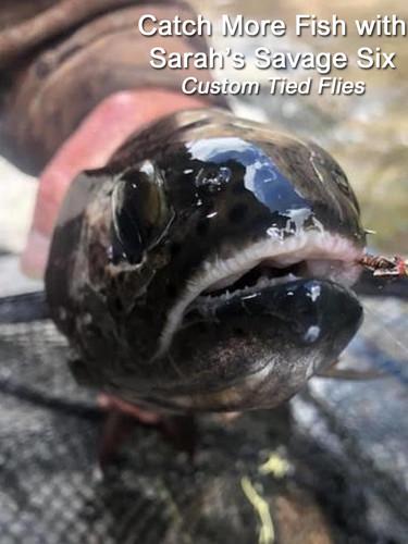 Catch More Fish 2.jpg