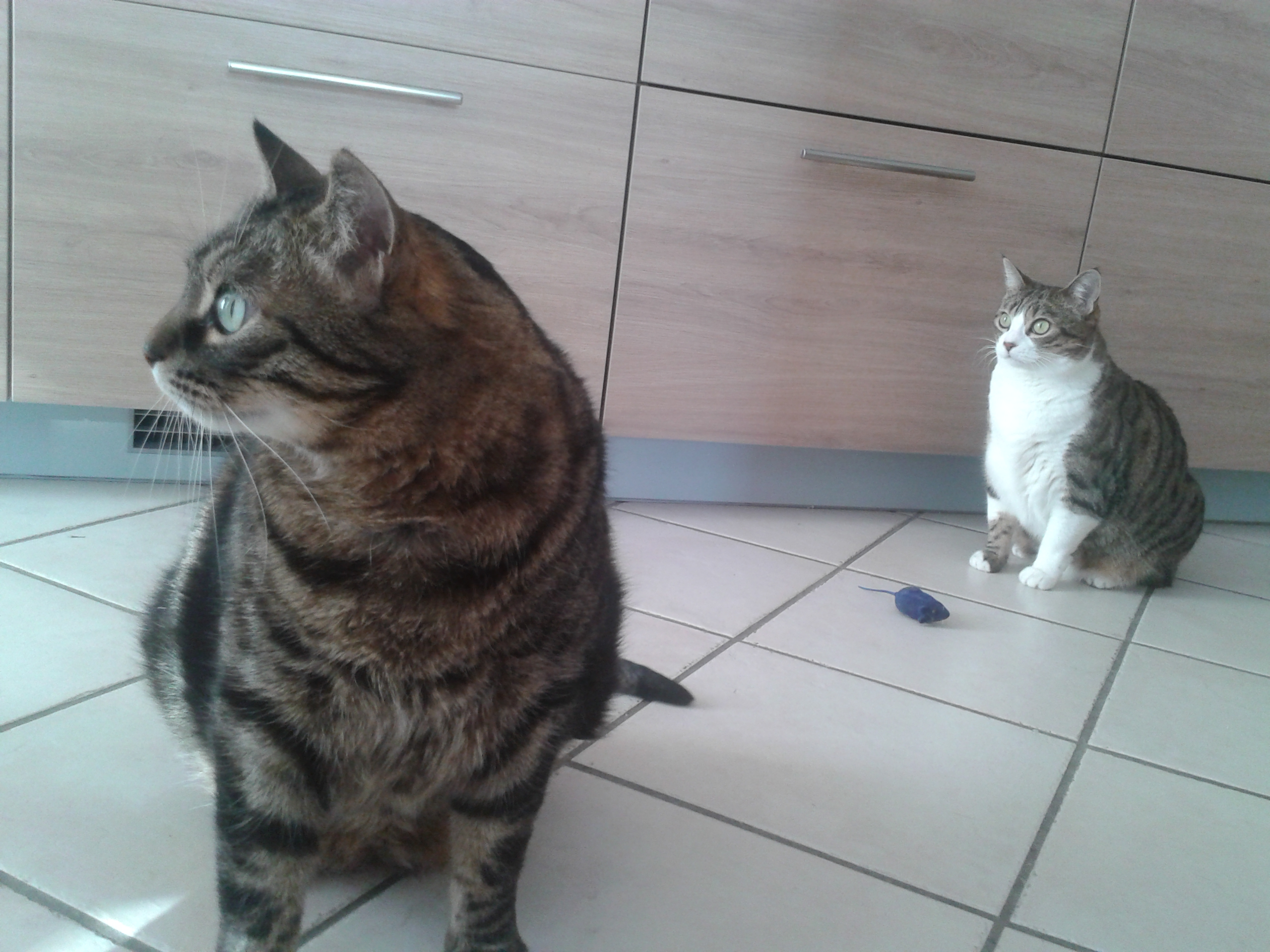 Mobi et Zora