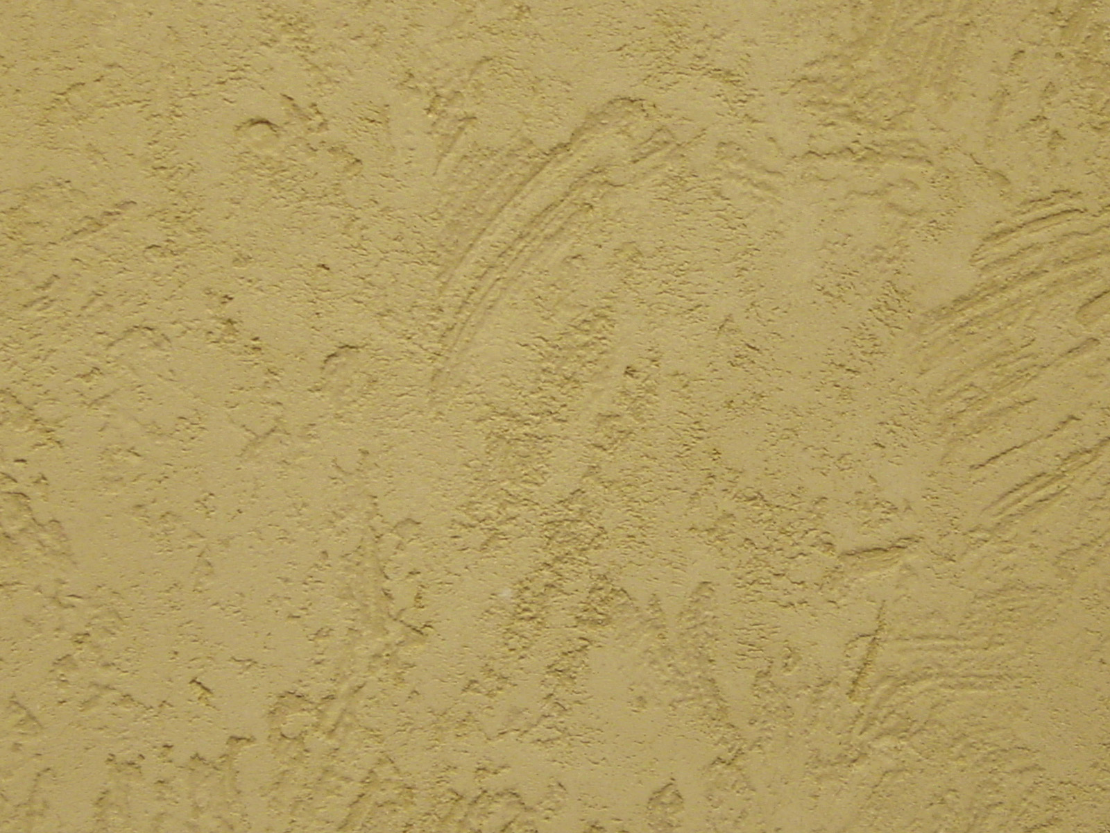 fossil texture