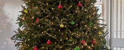 Christmas Tree small section.jpg