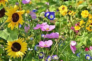 flower-meadow-3598555_640.jpg