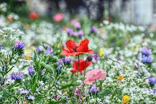 flower-meadow-5431038_640.jpg