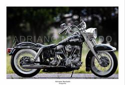 TN_Harley Panhead_.jpg