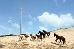 TN_BR_windmill_019 Adriano Machado.JPG