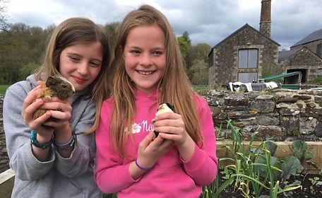 stone farm study centre baby guineapig