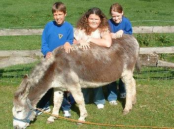 Stone Farm study Cetre Donkey Minty