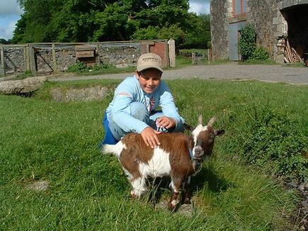 baby goat study centre