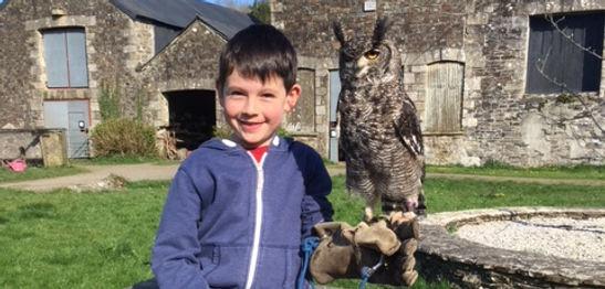 stone farm study centre hedwig the owl