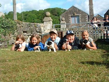 stone farm study centre puppies