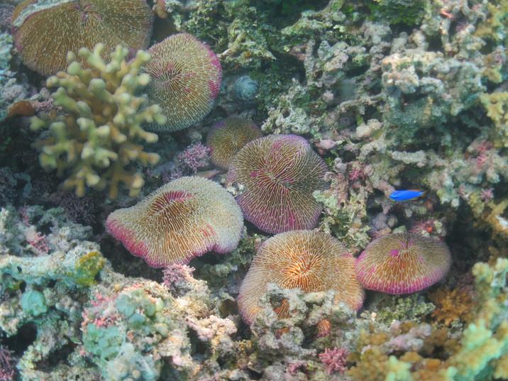 Underwater gardens of delight