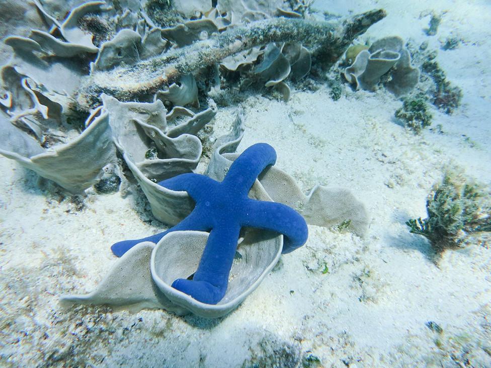 Snorkeling in Tonga