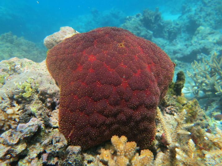 Incredible corals in Fiji