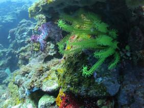 Mauliola allows amazing access to beautiful sealife