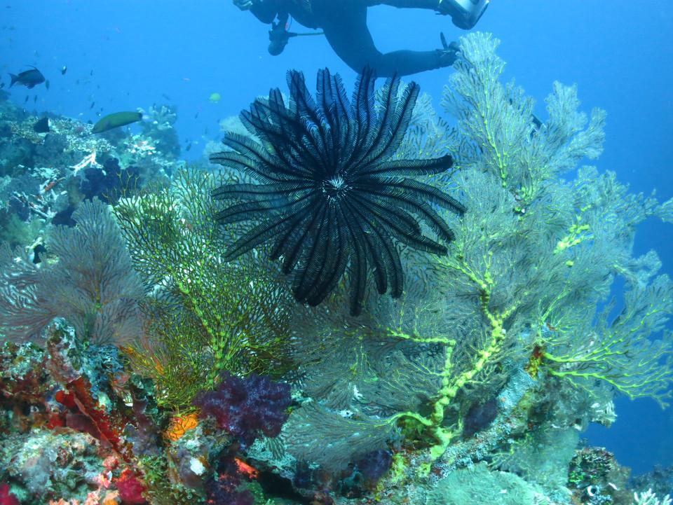 Amazing display of colors in Fiji
