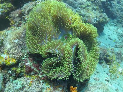 Underwater splendor in Fiji