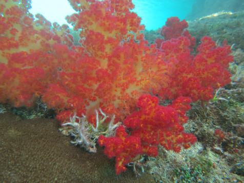 A rainbow of underwater colors