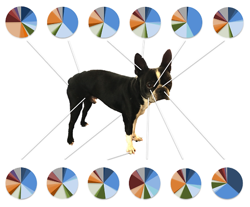 MiDOG Science figure 1
